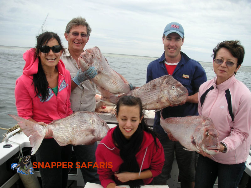 Another big haul of Snapper