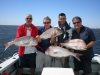 Snapper all round for this group of 4 - all very good sizes