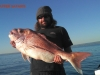 Scotty 14kg Tapleys Red