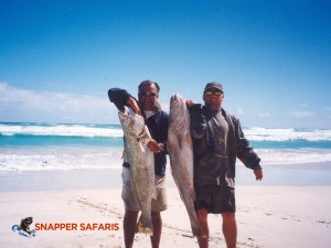 Mulloway caught on the beach at Fowlers Bay